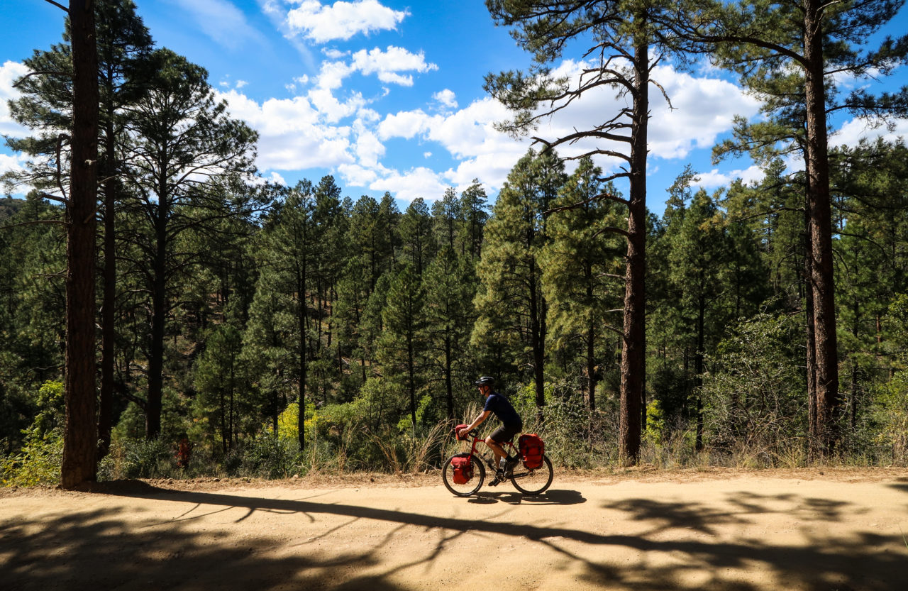 Bicycle touring pro in the Prescott National Forest pine trees