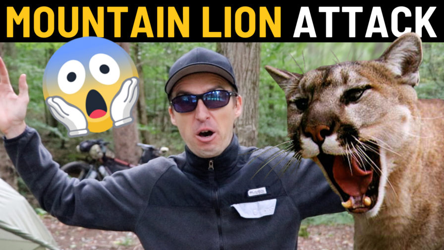 Cyclist Encounters Mountain Lion in US State of Virginia